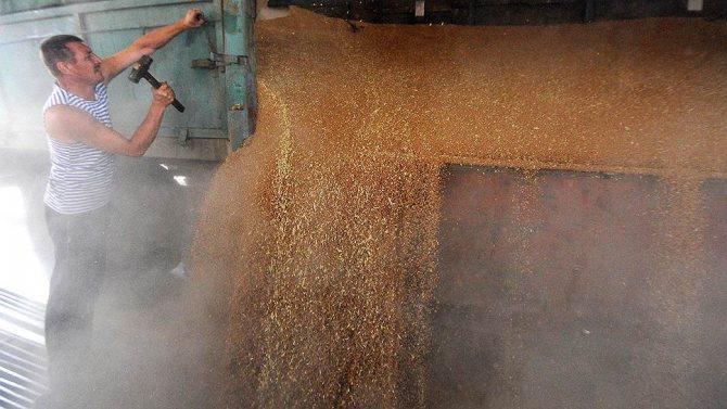 Экспортные цены на пшеницу обновили трехлетние максимумы
