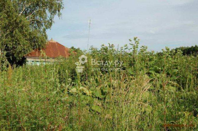 Как сделать огород из целины на даче