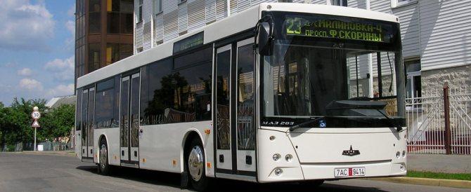 маз 203, автобус маз 203