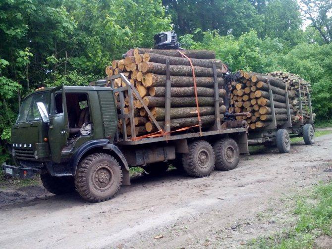 Перевозим Камазом лес